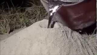 getlinkyoutube.com-شاهد ما يحدث عندما تصب الالمنيوم السائل داخل عش النمل سبحان الله