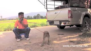 getlinkyoutube.com-รถขายยา โชว์ลิงจ๋อ