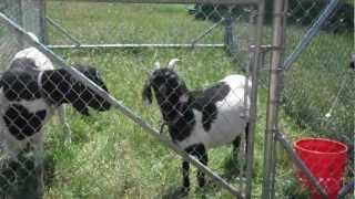 Goat Pen - Movable Feed Yard
