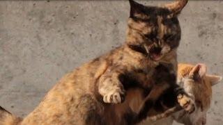 getlinkyoutube.com-【野良猫 観察記】 黒猫の悲劇 Tragedy of the black cat
