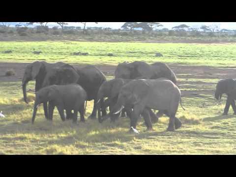 Baby Elephant - Amboseli National Park
