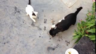 বিড়ালের মাছ ধরার আশ্চর্য্য ভিডিও : My Talking Cat