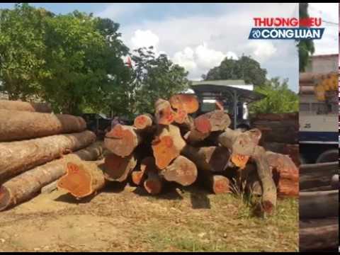 """Đắk Nông : Bắt khẩn cấp ông trùm đường dây phá rừng Phượng """"râu""""."""