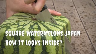 getlinkyoutube.com-Square watermelons Japan. English version