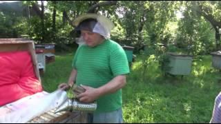 getlinkyoutube.com-Царь-мед на  пасеке белорусских пчеловодов! часть первая