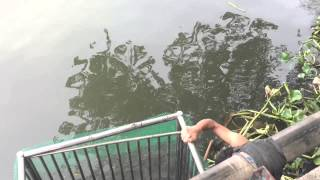 getlinkyoutube.com-ตกปลายี่สก เกือบ 10 โล แม่น้ำเจ้าพระยา นนทบุรี