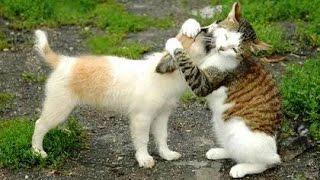getlinkyoutube.com-Meilleures Chiens et chats drôles de Janvier 2015 [FULL HD VIDEO]