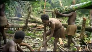 getlinkyoutube.com-Korowai Tribe - Building a new tree house