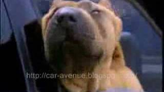AudiのCM。犬の顔見てたらAudiの素晴らしさがよくわかる。
