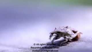 Böceğin ilginç ısınma hareketi