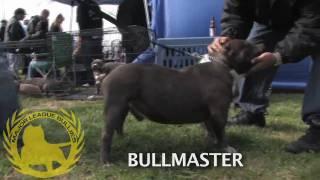getlinkyoutube.com-ABKC Dog Show 1-24-09 Dixon, CA