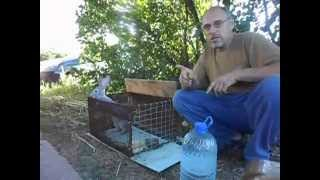 getlinkyoutube.com-Разведение кроликов в домашних условиях для чайников и дачников