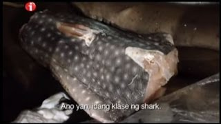 getlinkyoutube.com-Kara David spots illegal whale shark meat in Cebu | I-Witness
