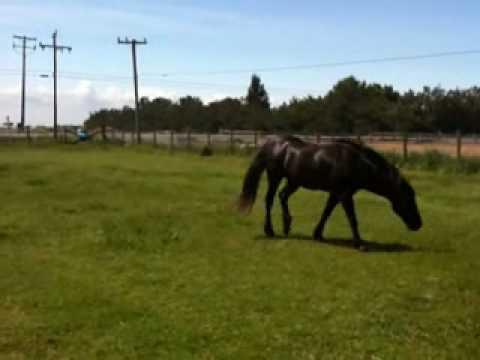 Stallion Mustang stealing mares in herd 4 of 6 - Rick Gore Horsemanship