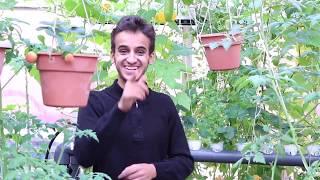 كيفية زراعة نبتة الفراولة والاهتمام فيها  How to grow strawberries plant and attention to the