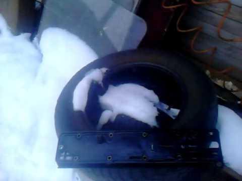Чистка системы вентиляции картера ситроен ксара пикассо 1.8 бензин