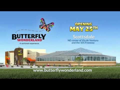 Butterfly Wonderland - A rainforest experience.