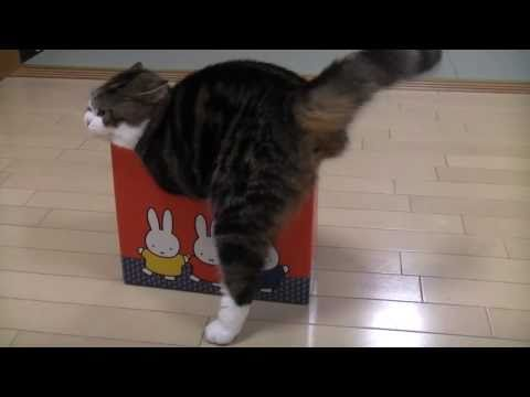 -Many too small boxes and Maru.-