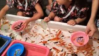 getlinkyoutube.com-金魚すくい すくえすぎる(笑)Cultural scooping goldfish of Japan 夏祭り
