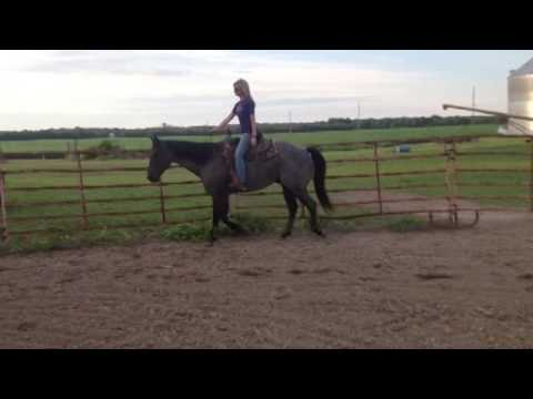 FOR SALE: DJMC PEPPYSFANCYROAN- 2009 Blue Roan Gelding