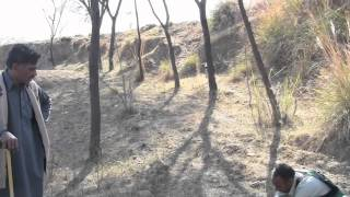 getlinkyoutube.com-goshawk hunting