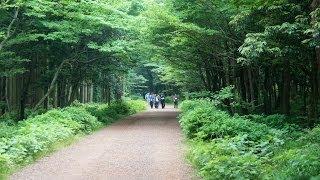 getlinkyoutube.com-사려니숲