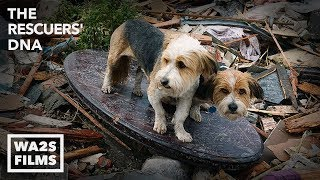 We Cried Tears of Joy Watching This Hope For Paws Reunion Between Boy & Howl Of A Dog After Tornado