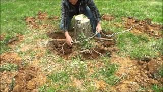 getlinkyoutube.com-Tree Stump Removal