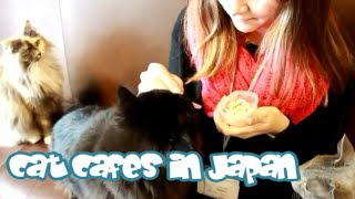 CAT CAFES in Japan!