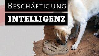 Intelligenzspielzeug für Hunde selber machen