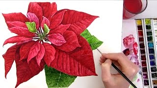 getlinkyoutube.com-How to paint a realistic Poinsettia for your Christmas card in watercolour