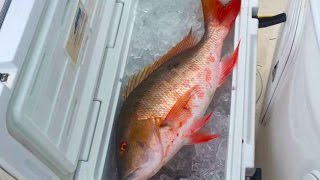 getlinkyoutube.com-Filleting a Large Fish with a small Knife! Snapper!!! Saltwater