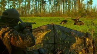 getlinkyoutube.com-Killer B Longbeards in the Bluegrass State