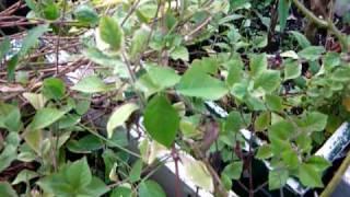 getlinkyoutube.com-Siddha Medicine - Herbs