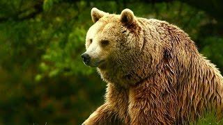 getlinkyoutube.com-Unedited Footage of a Bear | Infomercials | Adult Swim
