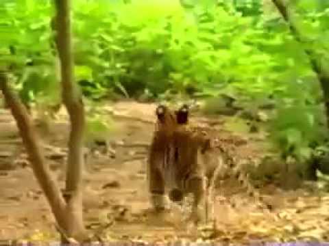 Hayvanlar Aleminin Ruh Hastası Hayvanı izle