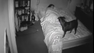 getlinkyoutube.com-Bossy the Paranormal Dog - Orbs - Ghosts - Spirits - CCTV  - Activity