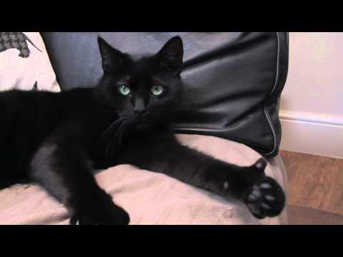 Cat Gives Camera Thumbs-up