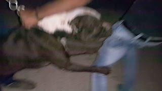 getlinkyoutube.com-هجوم كلب البيتبول على صاحبه ومدربه مع جمال العمواسي