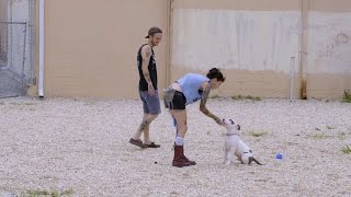 getlinkyoutube.com-Obedience Training with Prince Jr.   Pit Bulls and Parolees