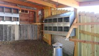 getlinkyoutube.com-My Big Backyard Chicken Coop