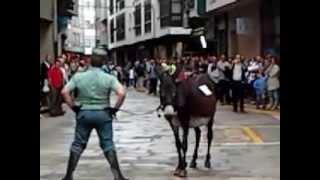 getlinkyoutube.com-Carrera de burros en Padron 2013  Donkey race
