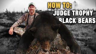 Identifying & Judging Trophy Black Bears