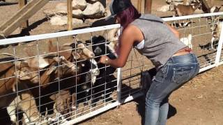 getlinkyoutube.com-The goat