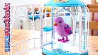 getlinkyoutube.com-Pajarito parlanchín con su jaula (Little Live Pets) Pia, canta y repite lo que dices.