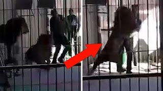 getlinkyoutube.com-Lion Fatally Attacks Lion Tamer In Front Of A Live Audience