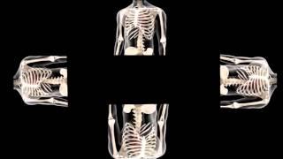 getlinkyoutube.com-video sobre el corazon para holograma