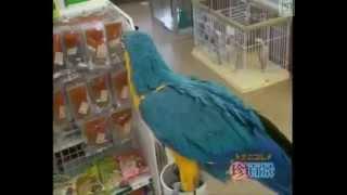 getlinkyoutube.com-The Funniest Parrots ever
