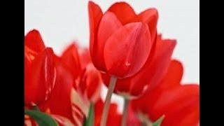 getlinkyoutube.com-Cara Membuat Bunga Tulip Dari Sedotan (Kerajinan Tangan Dari Barang Bekas)