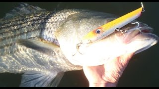 getlinkyoutube.com-Surfcasting for Striped Bass - Gibbs Pro Series Pencil Poppers